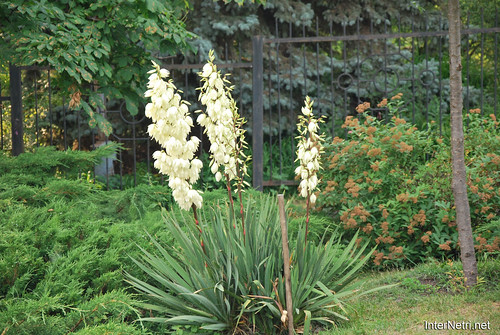Київ, Ботанічний сад імені Фоміна Ukraine InterNetri 11