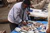 Essaouira shooting (giacomodalla2002) Tags: work fish marocco essaouira morocco