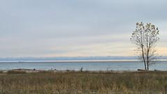 Tree & Ship, Lake Ontario, Canada (duaneschermerhorn) Tags: tree leafless bare brush water lake horizon blue sky white clouds ship cargoship boat