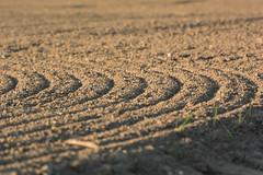 Sillons au soleil couchant (Tiolu.) Tags: sillon agriculture nature nikon 1v3 terre culture champ vaud denens