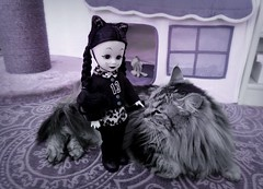 Happy Wednesday the 13th :) (pianocats16) Tags: kitty cat cute fluffy house wednesday addams doll custom ooak living dead dolls jinx outfit ears 13