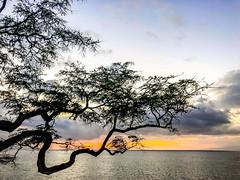 Good Vibrations (Thomas Hawk) Tags: america hawaii maui usa unitedstates unitedstatesofamerica wailea waileaelua sunset tree kihei us fav10 fav25 fav50 fav100