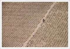 im Weinberg (https://www.norbert-kaiser-foto.de/) Tags: weinberg vineyard saarburg rheinlandpfalz rhinelandpalatinate rhénaniepalatinat renaniapalatinado renaniapalatinato viña vignoble treppe stairs escalera escalier scala