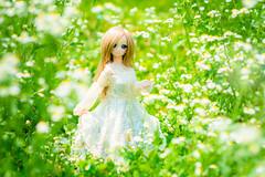春の尾をつかむ (akabarin) Tags: dollfiedream doll bjd volks