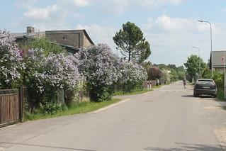 Lilacy street