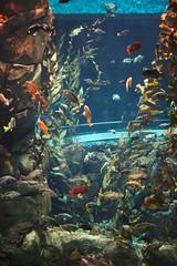 IMG_8722 (giltay) Tags: takumarsmc55mmf18 fish seaweed tank