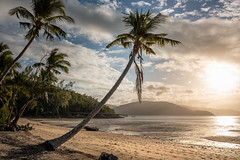 Happy Bay (Rafael Zenon Wagner) Tags: australien australia 28mm coralsea korallenmeer whitsundayislands sonnenuntergang sundown bucht bay palme palm licht gegenlicht light