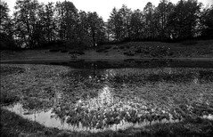 Mountain lake (MZ163) Tags: leicar8 elmaritr2828 ilfordpanf50 mountain lake landscape monochrome bw blackandwhite film filmphotographer filmisnotdead 35mmrussia 35mm