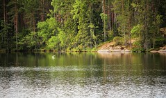 IMG_0286 (www.ilkkajukarainen.fi) Tags: fagervik uusimaa kesä summer 2018 suomi finland finlande happy life visit travel traveling järvi vesi lintu bird metsä forest three