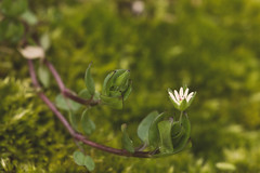 Sortir de terre (Meculda) Tags: fleur mousse nature macro nikon 105mm extérieur