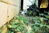 neko-neko2052 (kuro-gin) Tags: cat cats animal japan snap street straycat 猫 sigma dp2