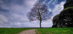 The Tree - 4831 (ΨᗩSᗰIᘉᗴ HᗴᘉS +27 000 000 thx) Tags: longexposure fuji fujifilmgfx50s tree sentier path hensyasmine namur belgium europa aaa namuroise look photo friends be wow yasminehens interest intersting eu fr greatphotographers lanamuroise