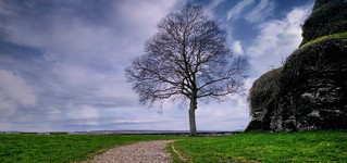 The Tree - 4831