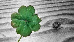 I feel so lucky (uffagiainuso) Tags: selective selectivecolourization selectivecolor colorsplash green nature natura details detail detalles dettagli bokeh flower quatrefoil lucky ifellsolucky fourleafclover clover leaf getlucky luckyday happy bnw bw clovers spring leaves fourleaf 4leaf luckyclovers