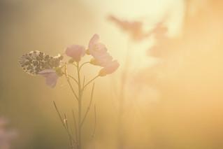 L'aurore et sa lumière divine