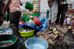 © Zoltan Papdi 2017-2816 (Papdi Zoltan Silvester) Tags: zanzibar stonetown scène viequotidienne lumière ombre humain voyage arrivage femme journalisme reportage pêcheur travail port pêche vente scene everydaylife light shadow human trip arrival wife journalism report sinner job harbor peach sale