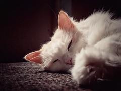 Catnap (J.C. Moyer) Tags: animal lumix panasonicdmcgx80 rustic mat whiskers color colour cute pet cat ragdoll ragdollcat james jamestheragdoll