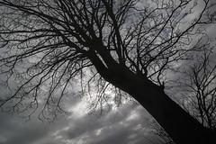 Træ i skæv vinkel 03 (Walter Johannesen) Tags: træ himmel skyer tree sky clouds
