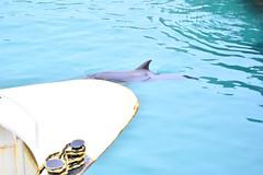 DSC_8587 (seustace2003) Tags: gaillimh galway ierland ireland irlanda inis oírr aran islands gaeltacht dolphin deilf delfin