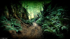 """"""" The Hell Lane Holloway """" ("""" P@tH Im@ges """") Tags: helllane symondsburydorset gorge holloway sunken sandstone grotesque england roots carvings grotto mary flowers pthway people stoneage redearthandstone light drovers magical"""