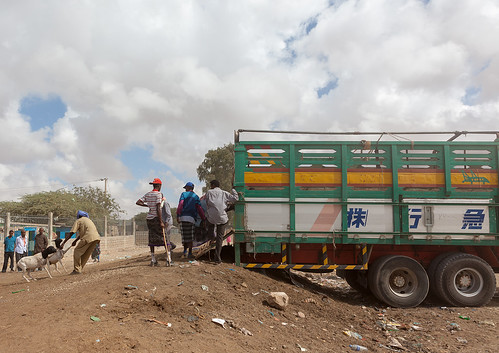 Men on a market loading sheeps in a truck, Woqooyi Galbeed region, Hargeisa, Somaliland