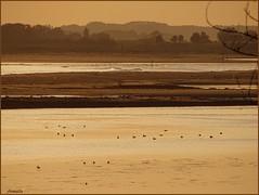 Golden hour (Armelle85) Tags: extérieur nature paysage coucher de soleil crépuscule eau mer océan lagune sunset ombres mouettes ciel
