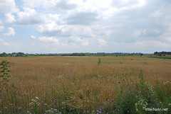 Пшениця, жито, овес InterNetri  Ukraine 050