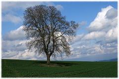 Der Baum (jodage) Tags: baum eifel roes canonpowershotg3x unlimitedphotosnorules