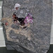Fluorite-sphalerite (Bluffton, Ohio, USA) 2