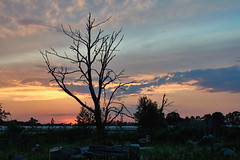 Dead tree in the sunset (mechanicalArts) Tags: sonnenuntergang toter baum sunset dead tree flektogon 35mm prakticar 24