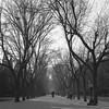 Morning Beijing - Film Hasselblad (Photo Alan) Tags: beijing blackwhite blackandwhite film filmcamera film120 filmscan filmhasselblad hasselblad hasselblad503cw carlzeiss carlzeissplanar80mmf28 outdoor winter trees street streetphotography landscape