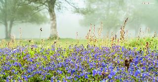 Flores entre niebla