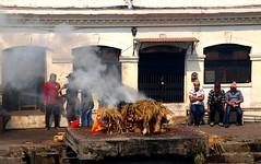 2018-03-24 (Giåm) Tags: kathmandu kathmandou katmandou katmandu काठमाडौं pashupatinath pashupatinathtemple पशुपतिनाथमन्दिर kathmanduvalley nepal नेपाल