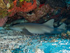Nurse Shark (R. Donald Winship Photography) Tags: aquaticlife cozumel dalilasreef divingunderwater nurseshark