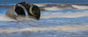 Mary's Shell looking splendid amongst the surf (sarahOphoto) Tags: lancashire england unitedkingdom gb marys shell sculpture beach sea ocean engulfed waves surf slow water long exposure little stopper landscape seascape nature motion lee canon 6d uk united kingdom seaside cleveleys