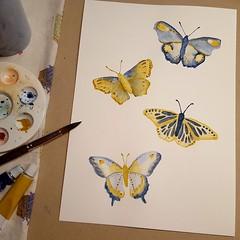 Butterflies (BoissinDesign) Tags: boissindesign watercolor butterfly butterflies yellow summer insects beauty painting wip artprocess yellowandblue blueandyellow blue lightblue