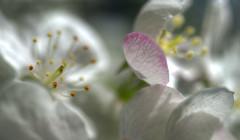 nature's language ῼ 16 (DeZ - photolores) Tags: macro details bokeh flowers hdr nikon nikond610 tamron90mmf28 dez