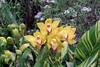 Chg100_7476 Orchids (dguysphotos) Tags: chicagoil marshallfields macys interiordesign walnutroom flowers orchids