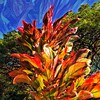 Psychedelic ti leaves (Remember To Breathe) Tags: plants leaves hawaiianplants hawaiian orange red tileaves psychedelic