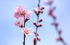 """The sun does not shine for a few trees and flowers, but for the wide world's joy."" — Henry Ward Beecher (genevieve van doren) Tags: amandier amandel prunusamygdalus buskampveld flanders westvlaanderen"