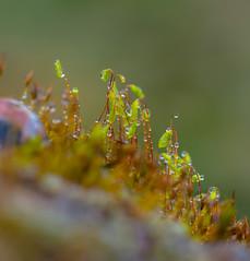 Spring Green. (Omygodtom) Tags: spring scene scenic moss water tamron90mm nikkor contrast coth5 dof d7100 rock zapper zinger macro