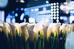 Flowers (Yannick Charifou Photography ©) Tags: nikon d850 afs35mm14g 35mm 35mm14 14 wide wideopen bokeh deepoffield depthoffield dof profondeur profondeurdechamps fleur flower blue bleu blanc vert green charifou champs nature blooming bâle baselworld 2018 suisse