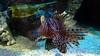 2018_03_SeaLife07 (GrazerX) Tags: sealife lochlomond aquarium fish scotland graemesimpson samsung galaxy s9 s9plus