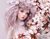 In bloom (pure_embers) Tags: pure laura embers bjd doll dolls england uk girl popovysisters popovy sisters littleowl little owl pureembers owlina embersowlina photography photo ball joint resin portrait fine art lavender wig blossom pastel