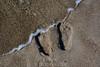 20180408 MARKGRAFENHEIDE (63).jpg (Marco Förster) Tags: dobermann hunde natur markgrafenheide ostsee strand frühling