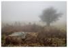 Baskerville Country (don't count the pixels) Tags: devon dartmoor houndtor houndofthebaskervilles mist fog trees