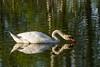 Mirror (Koberek@) Tags: sulików koberek sony slt 37 poland polska przyroda ptaki landscape lower silesia dolnyśląsk outdoor wild wald wiosna dof