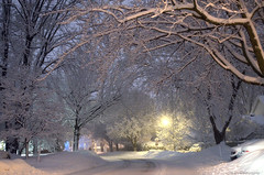 Winter White (Captions by Nica... (Fieger Photography)) Tags: winter weather trees tree nature serene snow storm snowstorm suburbs road street lights light landscape lamp wonderland march outdoor quebec canada