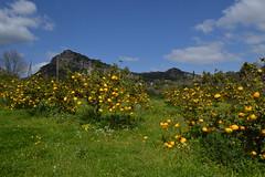 Sa Pompìa, Siniscola (Sardinia SlowExperience) Tags: sapompia siniscola slowfood sardegna sardynia sardinia