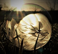Bubble in the Grass..x (Lisa@Lethen) Tags: bubble grass frost frozen cold weather frosty sunshine sunlight sun dawn morning sunrise macro